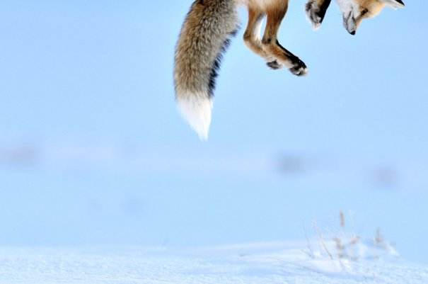 Richard Peters/Veolia Environnement Wildlife Photographer of the Year 2012