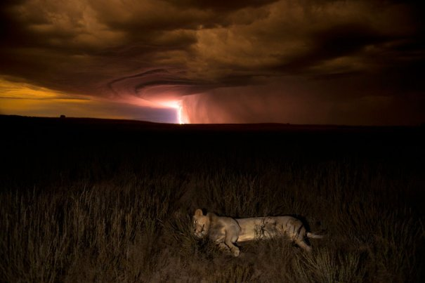 Hannes Lochner/Veolia Environnement Wildlife Photographer of the Year 2012