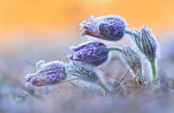 Daniel Eggert/Veolia Environnement Wildlife Photographer of the Year 2012