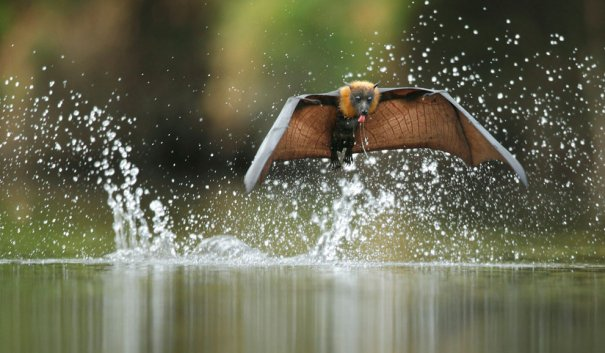 Ofer Levy/Veolia Environnement Wildlife Photographer of the Year 2012