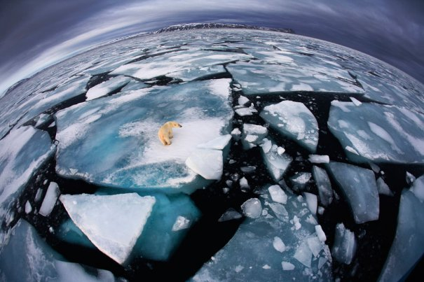 Anna Henly/Veolia Environnement Wildlife Photographer of the Year 2012