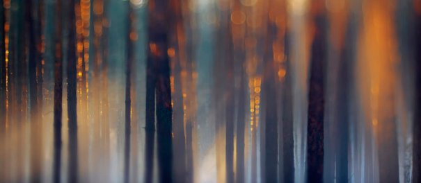 Sandra Bartocha/Veolia Environnement Wildlife Photographer of the Year 2012