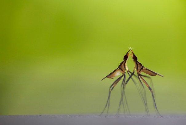 Klaus Tamm/Veolia Environnement Wildlife Photographer of the Year 2012