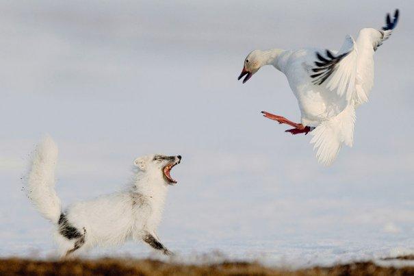 Sergey Gorshkov/Veolia Environnement Wildlife Photographer of the Year 2012
