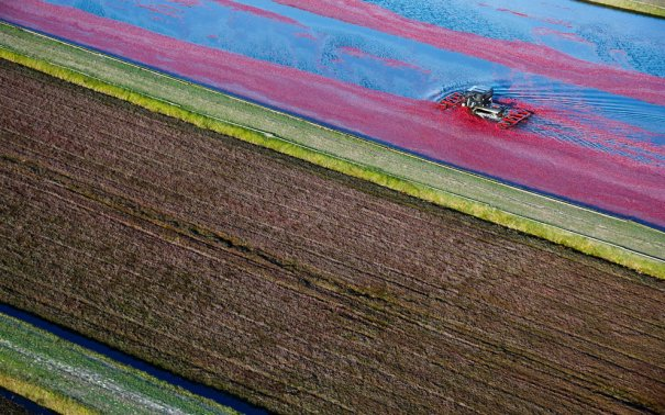 AP Photo/Wisconsin State Cranberry Growers Association, Andy Manis