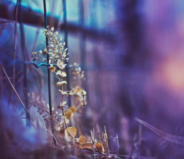 Фотограф Кристина Манченко - №6
