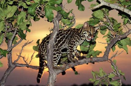 Фото Дикой природы