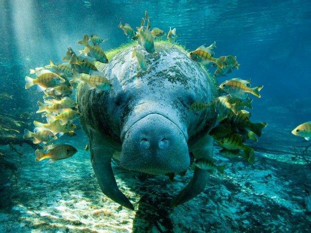 Как делать подводные фотографии? - №3