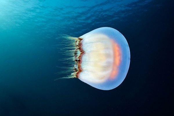 глубины моря фото