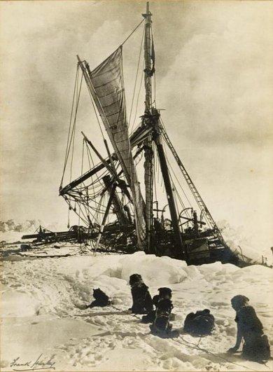животные антарктиды фото
