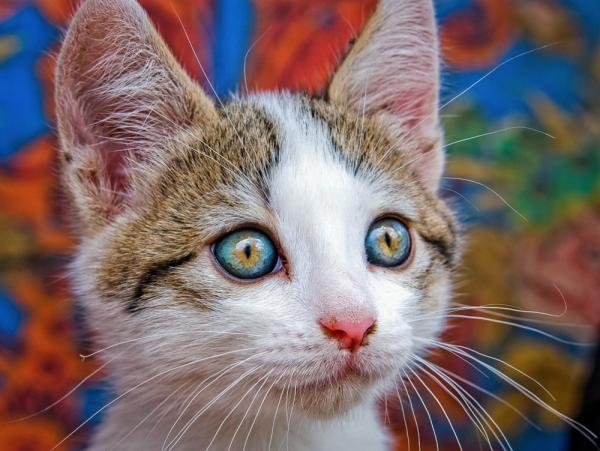 самые красивые глаза