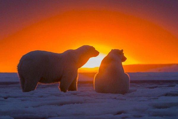 .. ИЗБРАННОЕ. (из коллекции National Geographic)