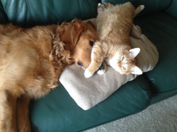 Коты и собаки