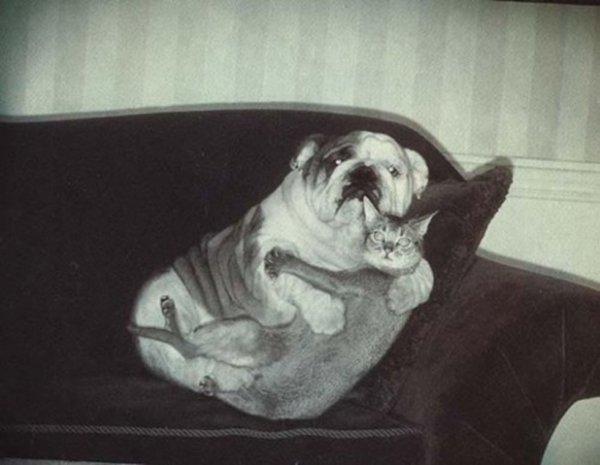коты и собаки фото