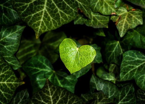 Природа нас любит
