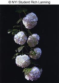 flowerb0406
