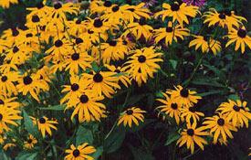 flowerk0304