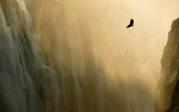 .. Величие орлов… (из серии ИЗБРАННОЕ)