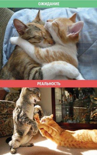 кошка в домашних условиях