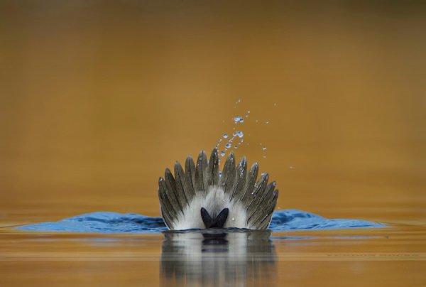 Орёл или решка. Автор фото: Вердон Рокс - Удачные кадры