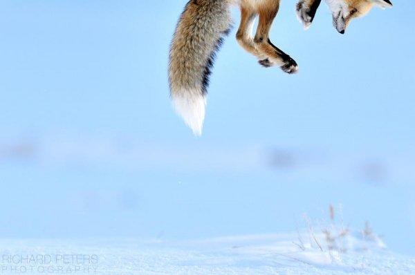 Атакует снег. Автор фото: Ричард Питерс - самые удачные кадры