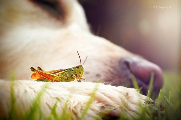 .. Как и люди — собаки тоже умеют любить, а главное - дружить..!!! :) - №4