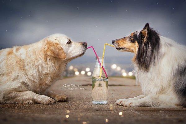 .. Как и люди — собаки тоже умеют любить, а главное - дружить..!!! :) - №8