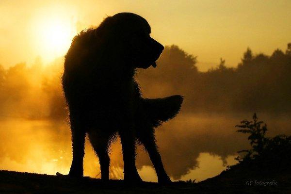 .. Как и люди — собаки тоже умеют любить, а главное - дружить..!!! :) - №12