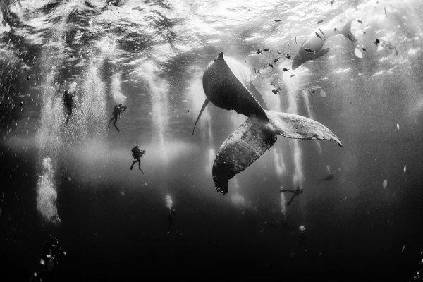 © Anuar Patjane - Фотографии без фотошопа