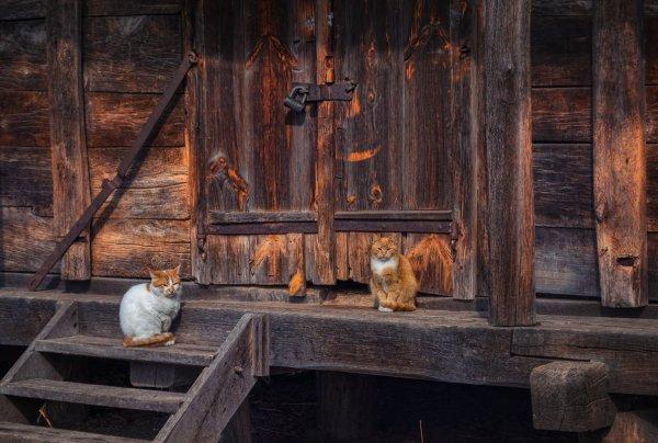 Юрась (http://fotokto.ru/id55056)