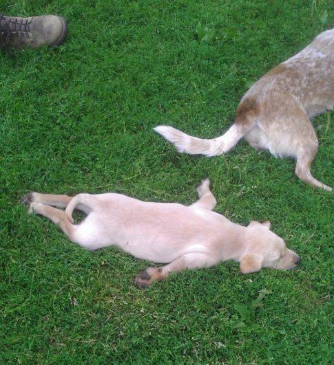 смотреть фотографии собак
