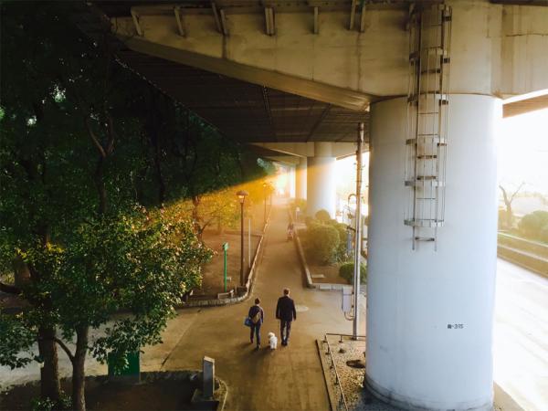 Мобильная фотография - Солнце – лучший источник освещения в фотографии
