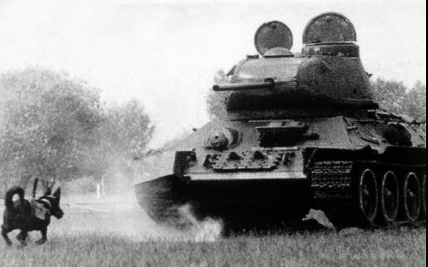 Собаки - истребители танков.