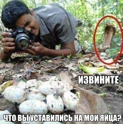 фото юмор – опасно...