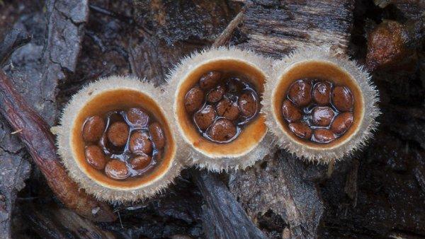 разные виды грибов на фото 5
