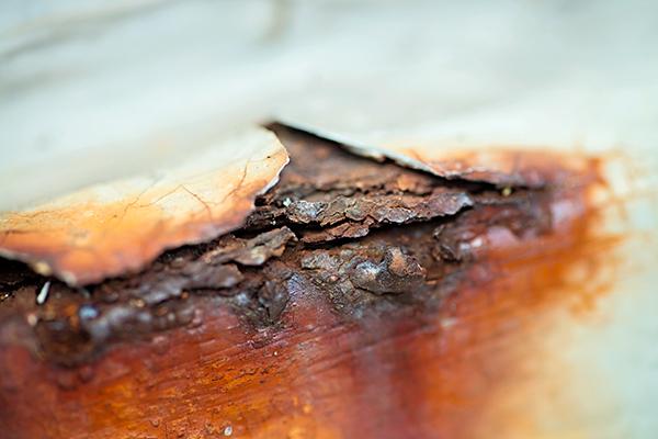 Макросъемка природы и предметов в вашем дворе. Старое дерево. Фото: Мари Гардинер