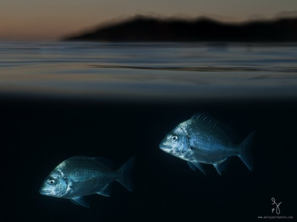 фото морских жителей 6