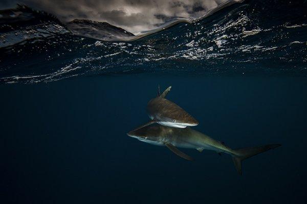 фото морских жителей 10