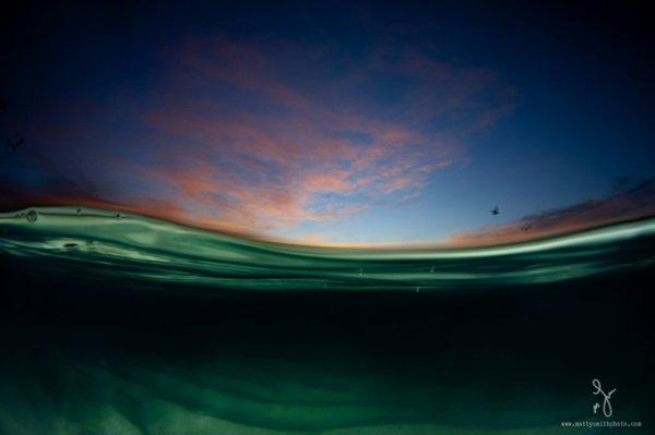 фото морских жителей 14