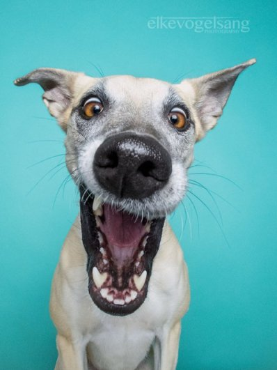 фотографии собак задорные