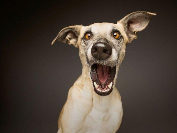 фотографии больших собак на темном фоне