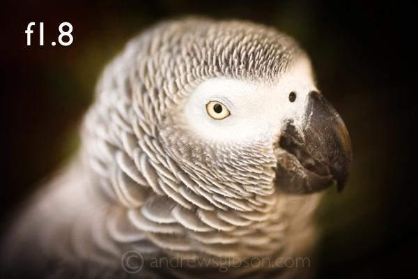 Фото животных из зоопарка – f/1.8