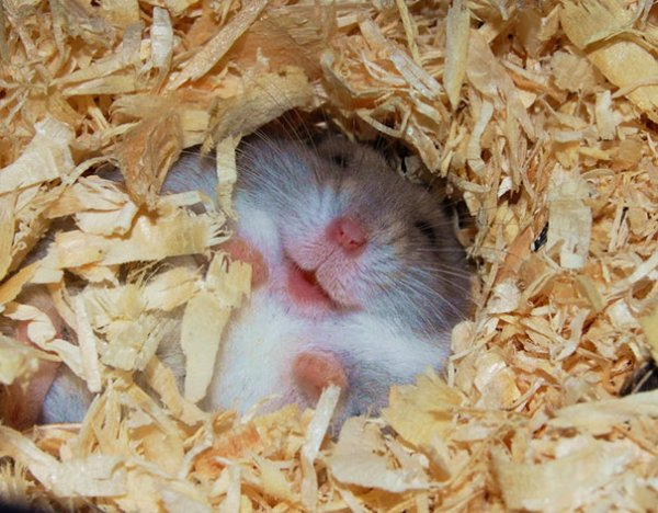 счастливые животные на фото 15