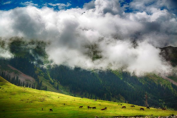 Природа Кыргызстана. Автор фото: Юлия Шевченко