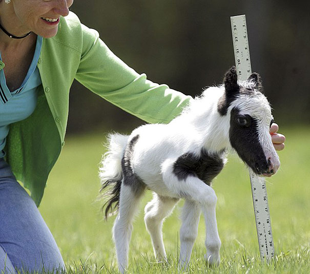 Детеныши животных – 4