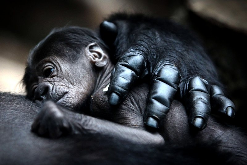 Детеныши животных – 20