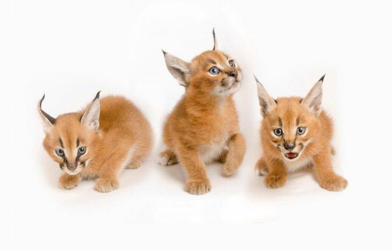 Детеныши животных – 24