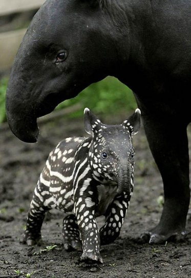Детеныши животных – 28