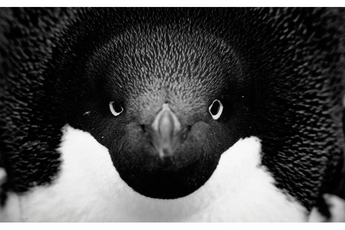 Фото Антарктиды 2 – Фотограф Алекс Бернаскони