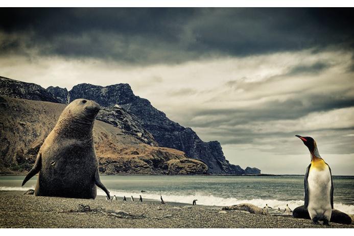 Фото Антарктиды 6 – Фотограф Алекс Бернаскони
